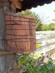 Enxames de abelha jatai