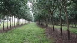 Fazenda para venda em Olimpia-SP, area 61,3 alqueires sendo 46 alqueires em cana, 4 repres