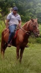 Cavalo mestiço de quanto de milha