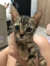 Estamos doando este gatinho
