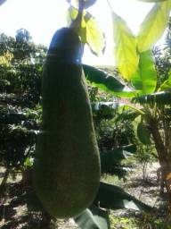 Vende-se Frutas e Legumes