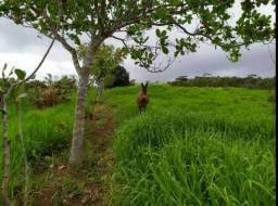 Fazenda com Represas, cacau e pasto