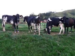 Belíssima Fazenda em Lorena - Cód 2291