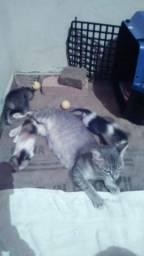 Gatos filhotes para doação