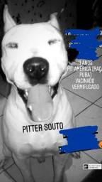 DOAÇÃO PITBULL AMÉRICA