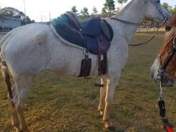 Égua top