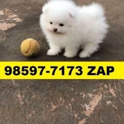 Canil Filhotes Cães Líder BH Spitz Alemão Maltês Bulldog Lhasa Yorkshire Shihtzu Poodle
