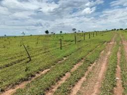 Fazenda 100Ha Região Bom Jardim, Ótimo investimento para loteamento de chácaras