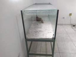 Aquario 370 litros