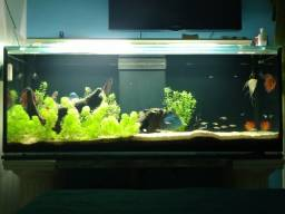 Aquario 674L Totais