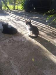 Doação consciente/gatos filhotes