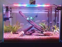 Aquário 72L completo com filtro, luminária e decoração