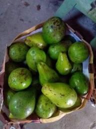 Título do anúncio: Vendo abacate ?