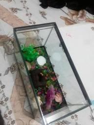 Vendo pequeno aquário  baratinho aquário com acessórios