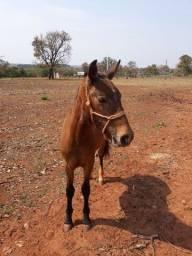 Título do anúncio: Vendo um cavalo de 1 ano e 4 meses interessado chama no watts *