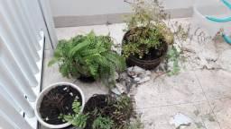 Plantas Naturais excelente preço
