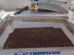 Larvas de Tenébrios molitor