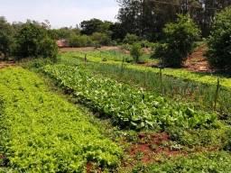 Alface _almeirão _ cheiro verde tudo orgânico para consumo ou revenda preço de varejo
