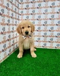 Golden Retriever é no Da Madre Pet Shop