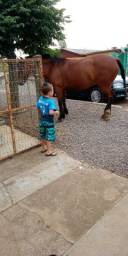 Cavalo muito bom