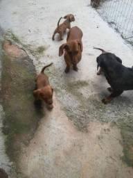 Cachorros basse