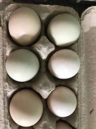 Ovos caipiras galados