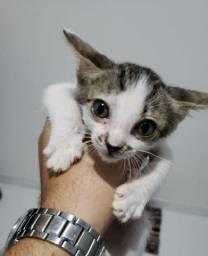 Doa-se gato macho