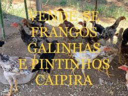 VENDO FRANGOS GALINHAS E PINTINHOS CAIPIRA