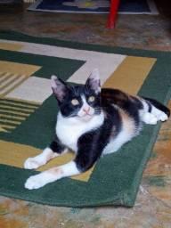 Título do anúncio: Doa-se filhote de gato