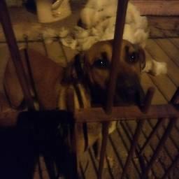 Título do anúncio: Doação de cachorrinha abandonada
