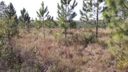 Fazenda 150 Alqueires, Região de Itapetininga-Sp
