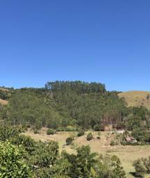 Vendo 20 mil pés de eucalipto Grandis