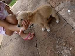 Doa-se filhote cachorra Dourados ms