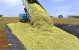 Silo de milho