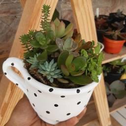 Suculentas em vasos decorativos