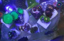 Pacote aquário marinho