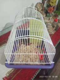 Doação hamster e gaiola