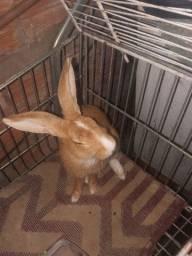 Vendo esse coelho