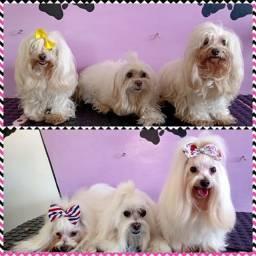 M & Y - Pet Shop Banho e Tosa - Estética Canina e Acessórios