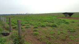 Título do anúncio: Fazenda 11.800 hectares em Juína MT