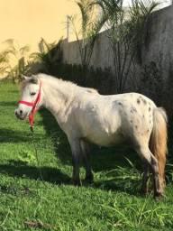 Título do anúncio: Mini Horse