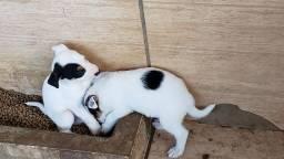 Doa-se  filhotes, em Assis-sp.