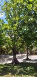 Vendo 03 chácaras com 3.500m2/5.000m2 e 6.000m2 em Parnamirim/Macaíba