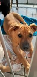 Doa-se Filhote de Cachorro- Adoção Responsável