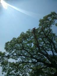 Corte de árvore
