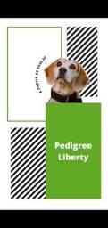 Faça o registro dos seus cães de raça