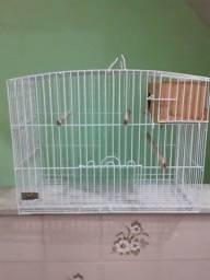 Gaiola de Ferro para Pássaros