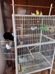 Título do anúncio: Gaiola/viveiro Aves Em Geral/calopsita/papagaio E Piriquito