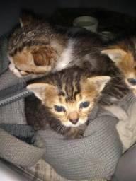 Doaçao de filhotes de gato