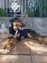 Cachorro macho para doação